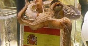 Mundial 2010 - Paul, el amuleto español, se retira